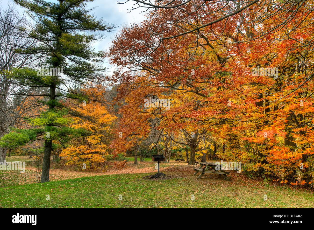 Beautiful autumn in Ontario park - Stock Image