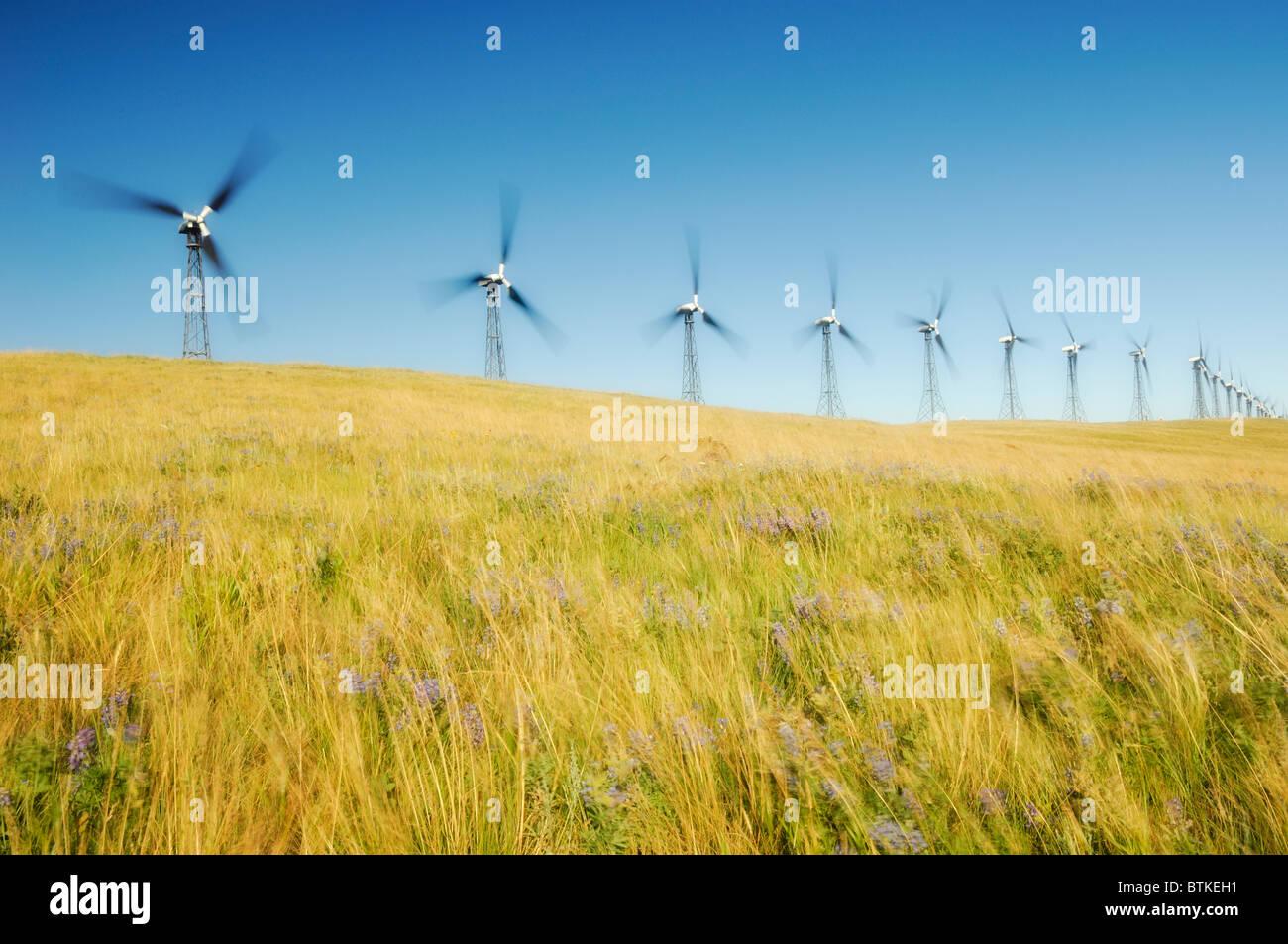 Windmills - Pincher Creek, Alberta, Canada - Stock Image