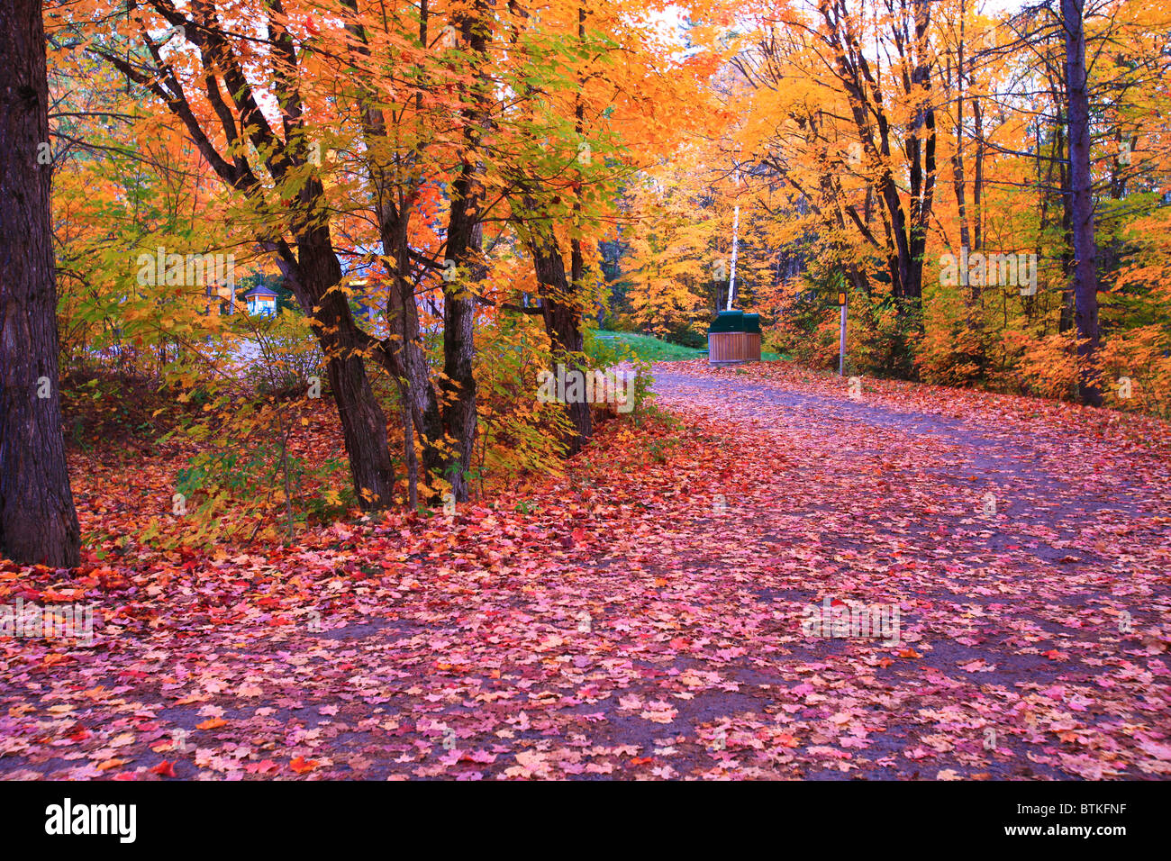 Fall foliage in a late afternoon in Algonquin provincial park, Canada - Stock Image