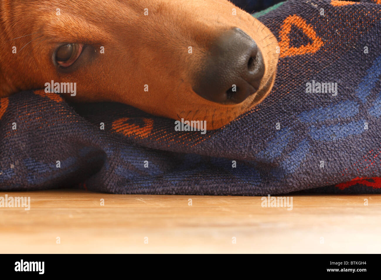 A dog's head - Stock Image