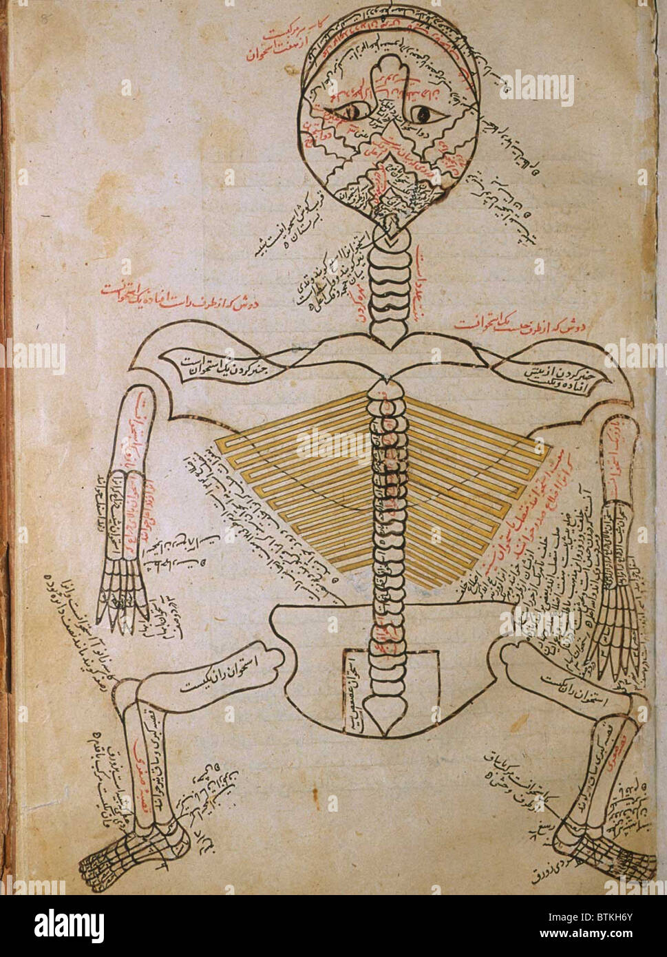 The Human Skeleton From Mansurs Anatomy By The Persian Scholar