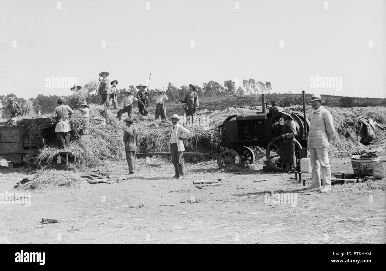 Harvesting grain on a Jewish communal agricultural settlement, a kibbutz, in Palestine. Ca. 1920-39. - Stock Image