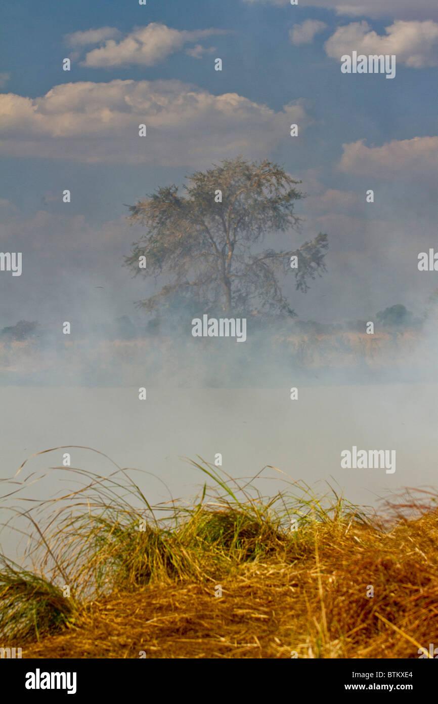 Fire in Tanzania, renewal of grazing fields. - Stock Image