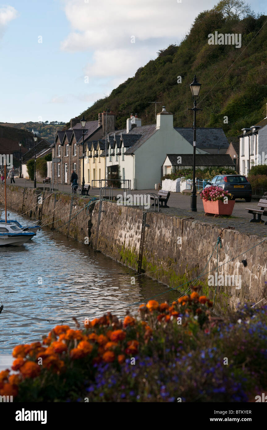 Fishermen's cottages with flowers in the foreground, along the harbour at Fishguard in Pembrokeshire, Wales, - Stock Image
