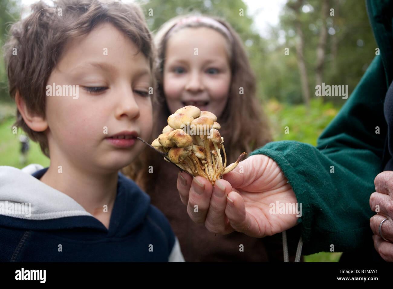 Armillaria mellea Children foraging Wild Mushrooms Forage Abinger Roughs UK. Photo:Jeff Gilbert - Stock Image