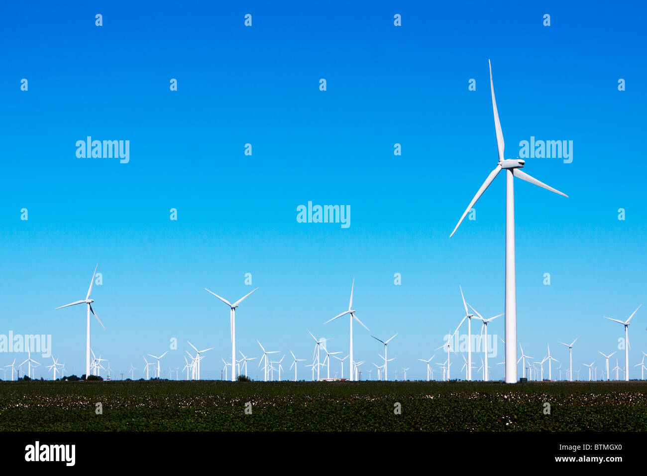 Wind Farm Turbine Towers rise over cotton fields in rural Texas. - Stock Image