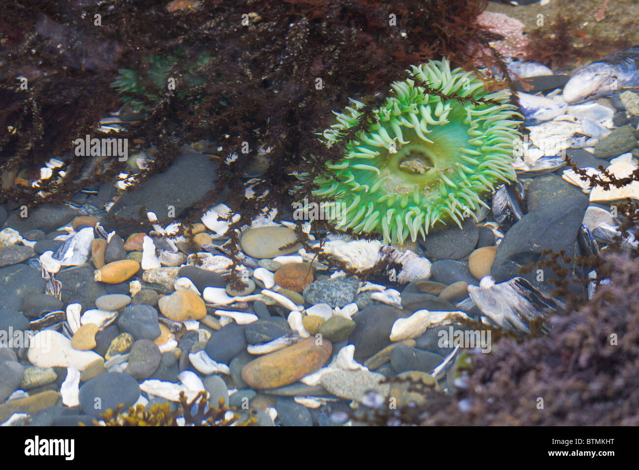 Tidepool on beach at Seal Rock State Park on the Pacific Ocean coast of Oregon - Stock Image