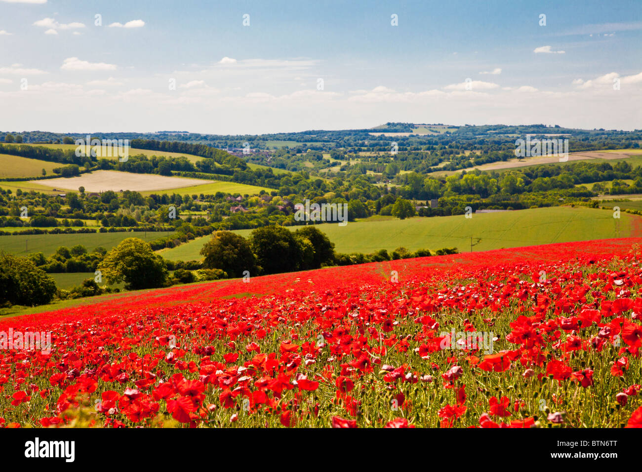 Poppy fields in sunshine on the Marlborough Downs, Wiltshire, England, UK - Stock Image