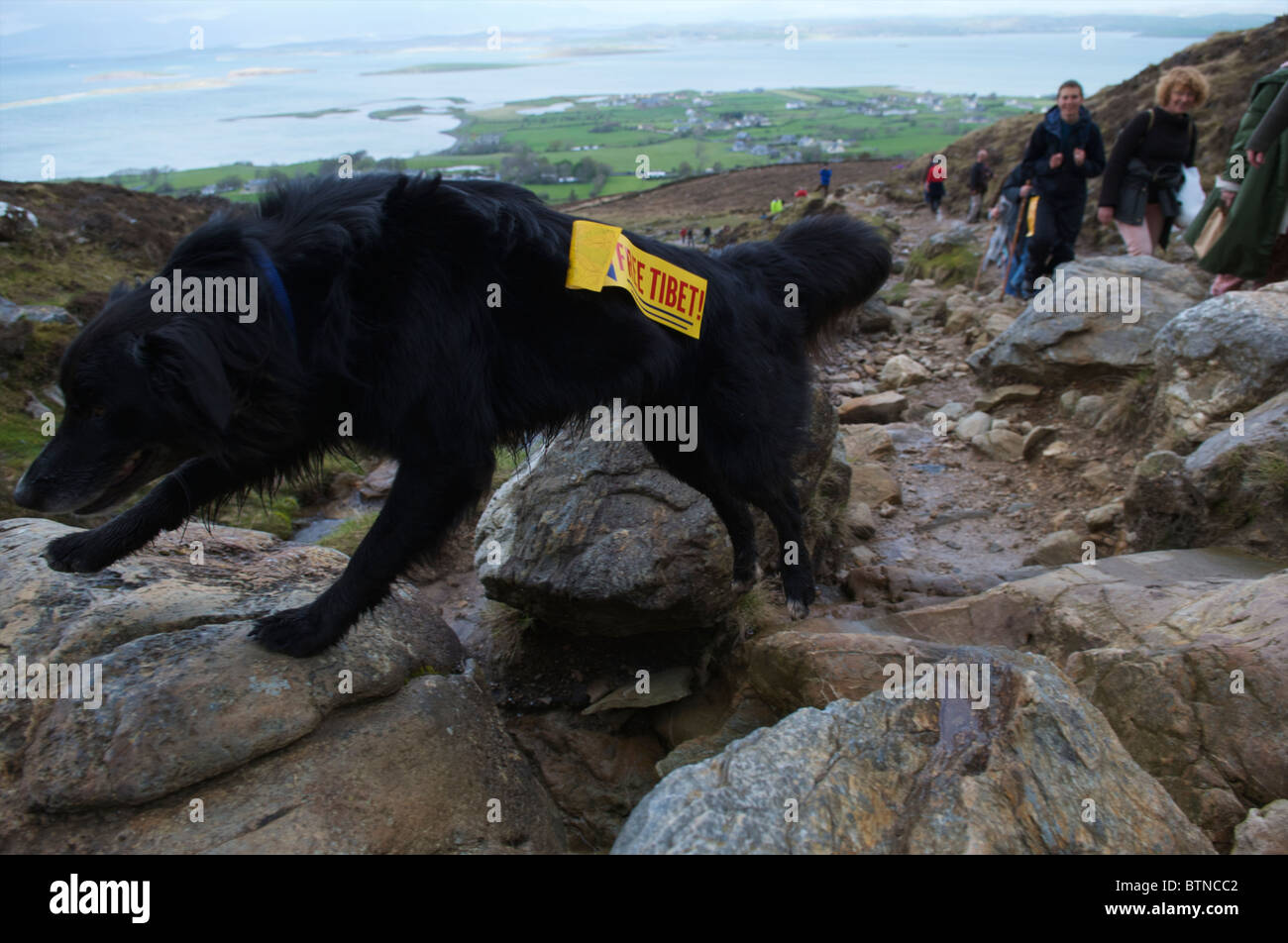 A black dog with a Free Tibet sign. - Stock Image