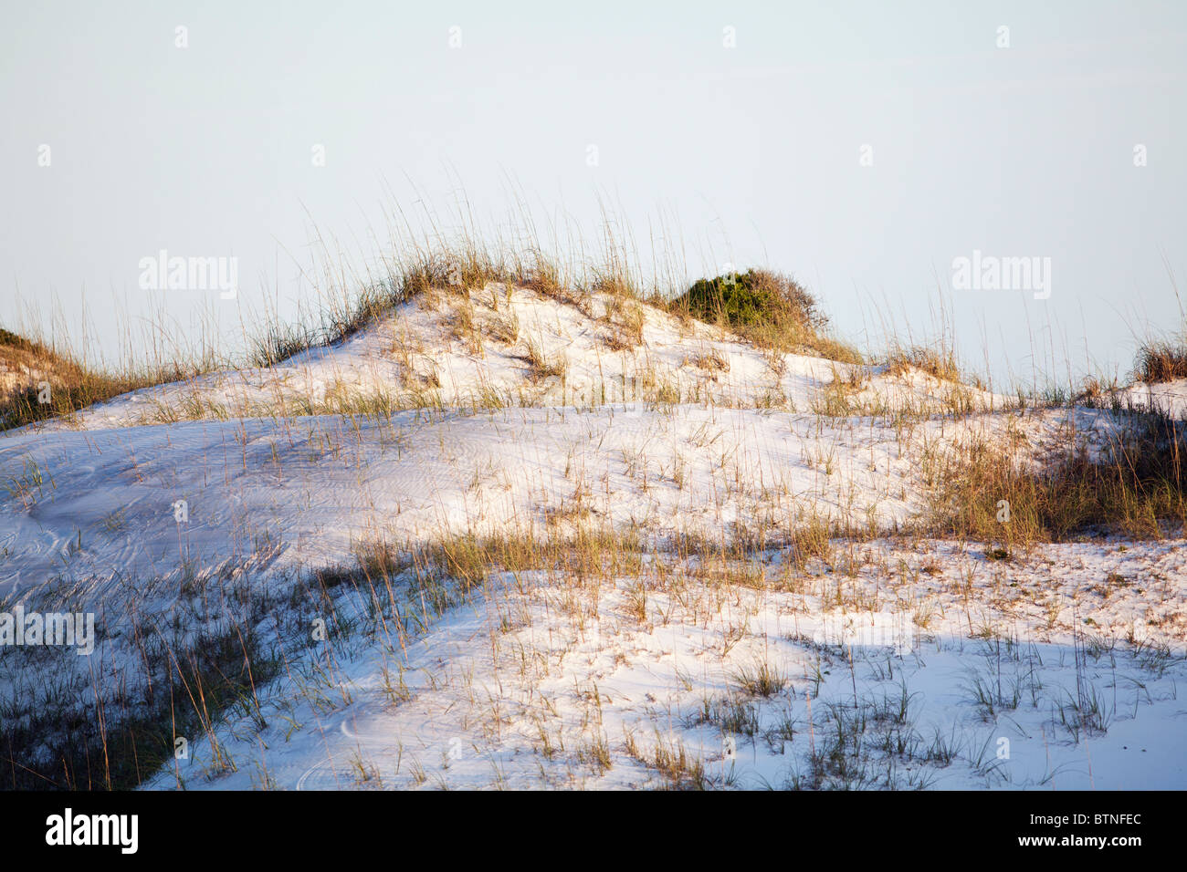 Rolling sand dunes on Florida's Gulf Coast. Stock Photo