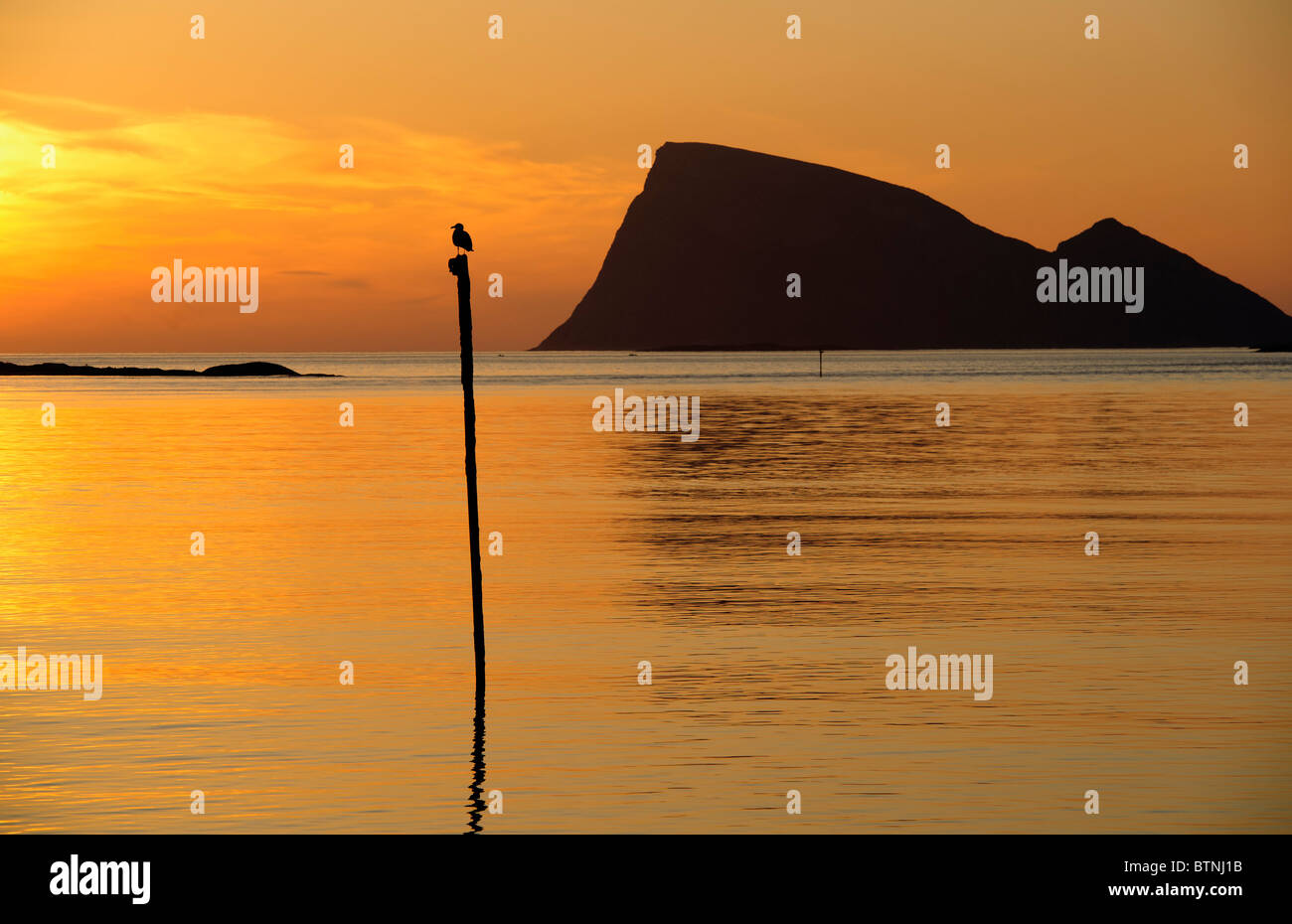 Seagull sitting on a pole, a seamark. Midnight sun in North Norway. Silhouette of the mountain Haja (Håja) in the Stock Photo