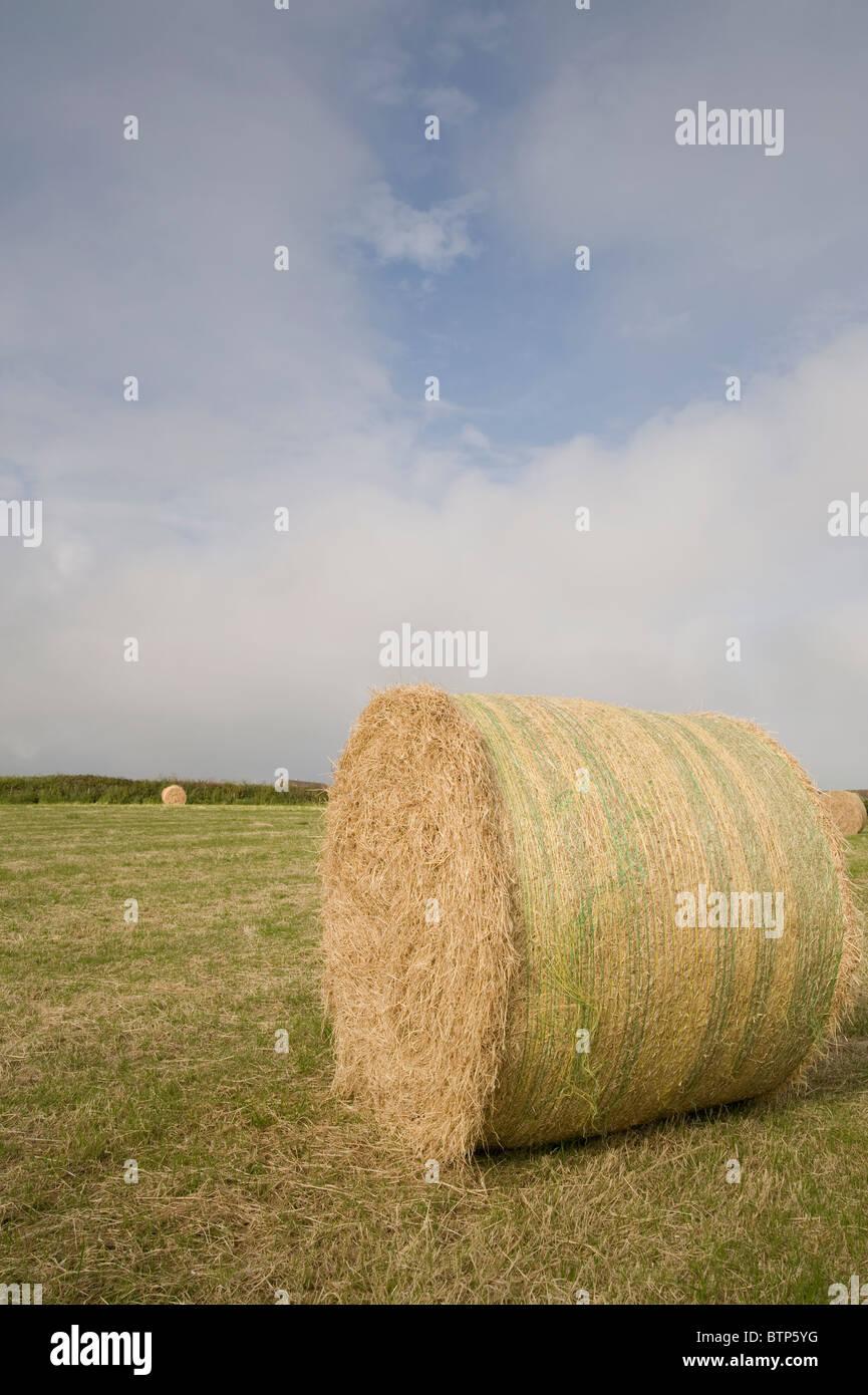Hay Bail, Cornwall, UK. - Stock Image