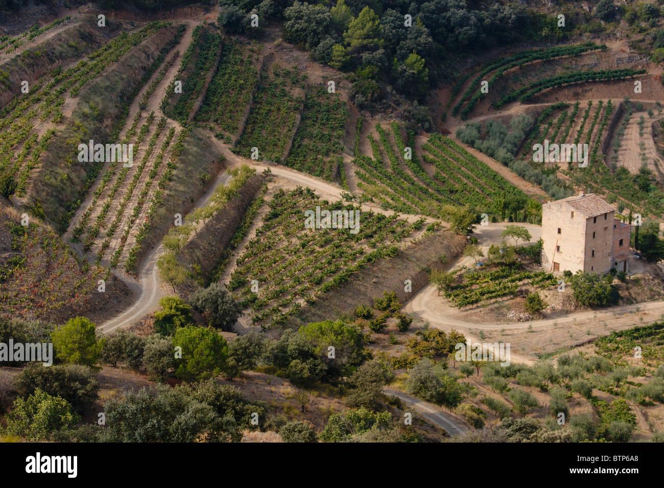 Spain, Catalunya, Priorat, Terraced Vineyards - Stock Image