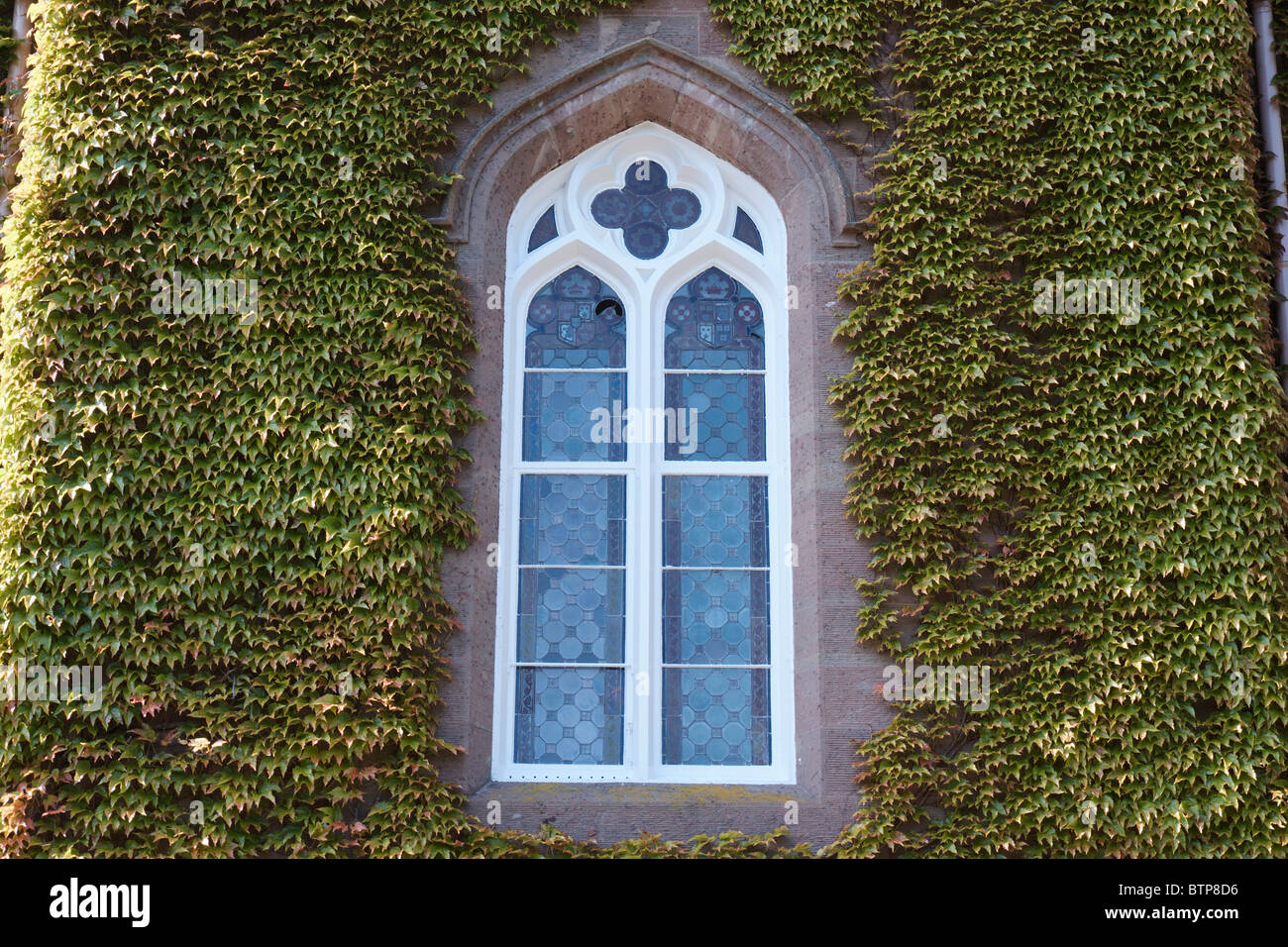 Scotland, Scone Palace, Ivy growing on wall - Stock Image