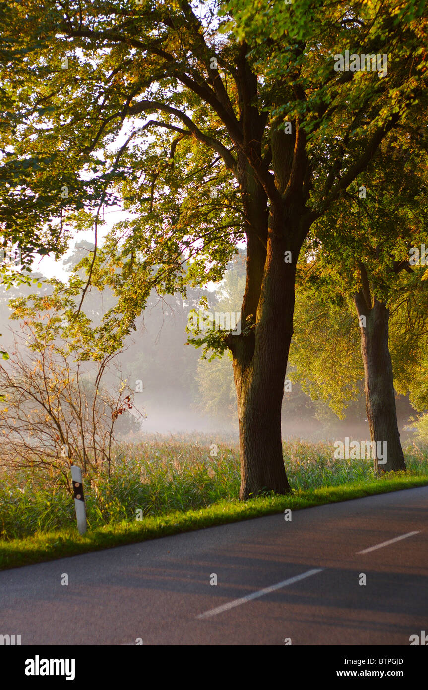 Germany, Brandenburg, Chorin, Trees on roadside - Stock Image