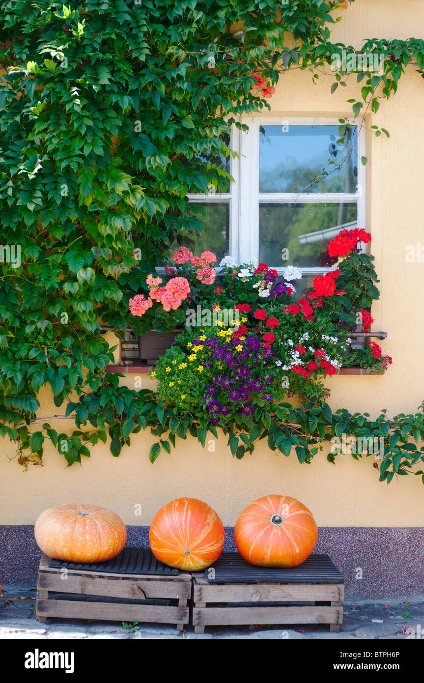 Germany, Potsdam, Window with flowers and pumpkins in foreground - Stock Image