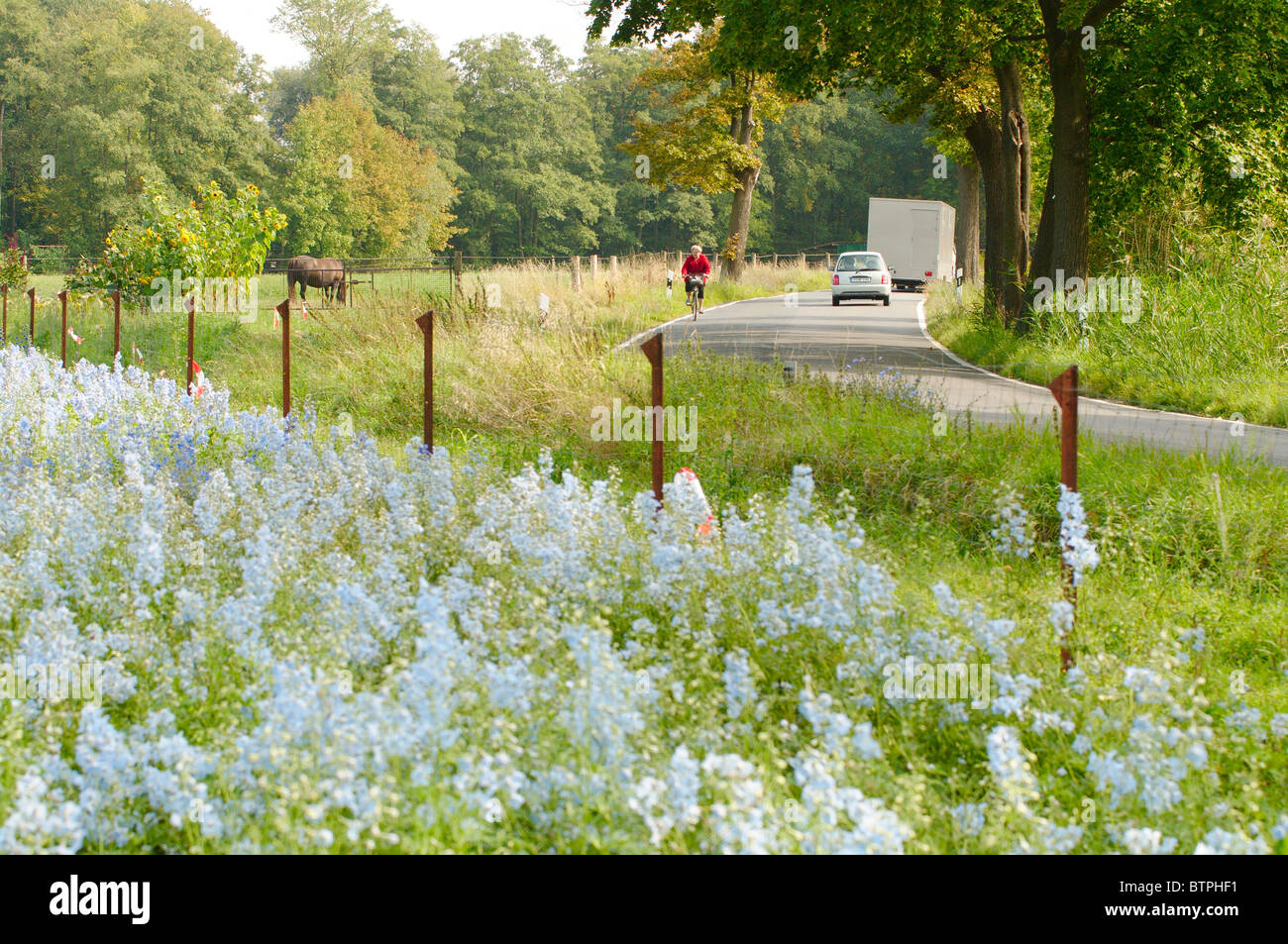 Germany, Potsdam, Grube, Wildflowers growing on roadside - Stock Image