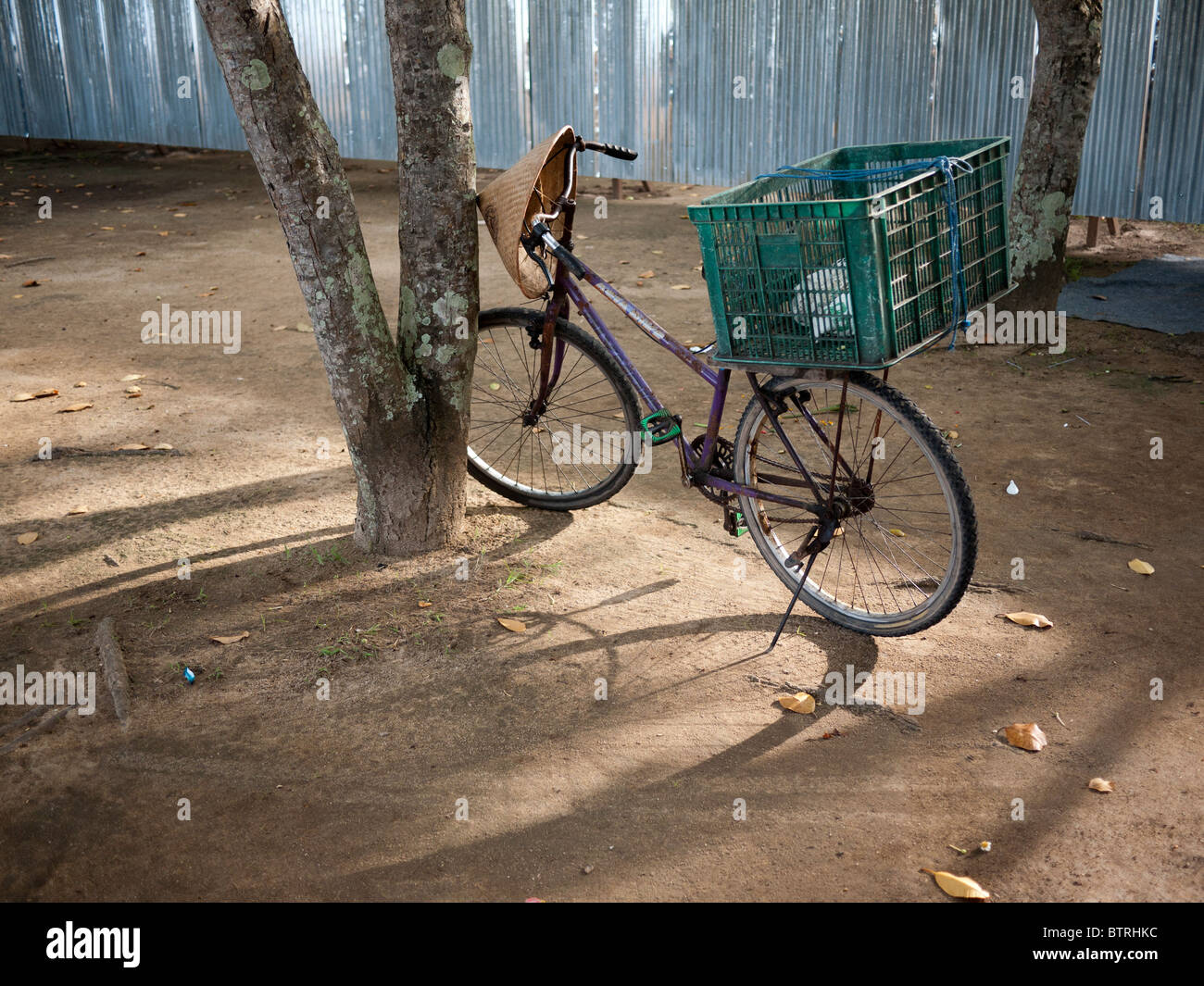 Cycle with carrier leaning against a tree sidelit, with conical straw hat on handlebars and plastic crate as a carrier - Stock Image