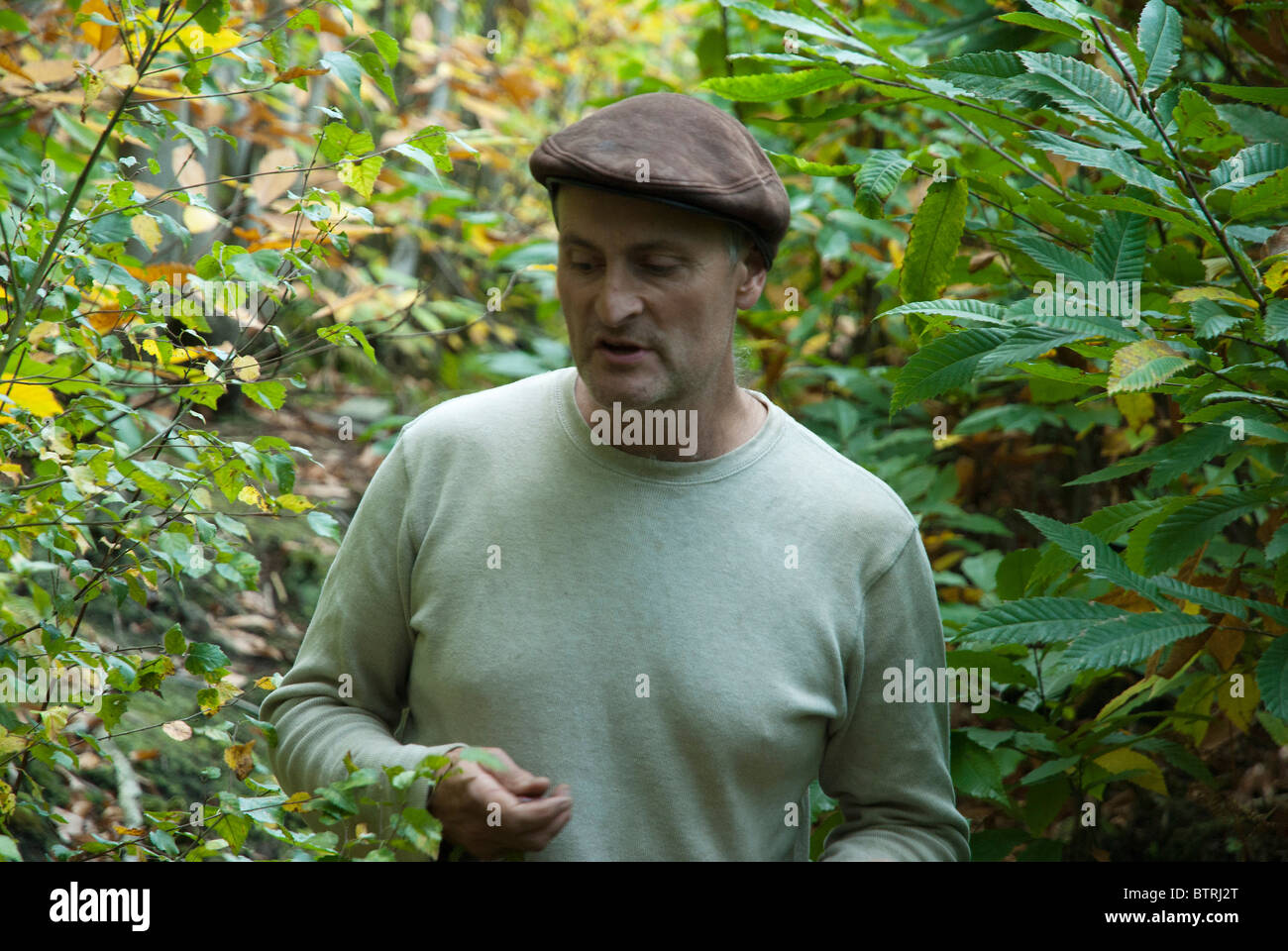 Ben Law with a background of sweet chestnut trees in Prickly Nut Wood - Stock Image