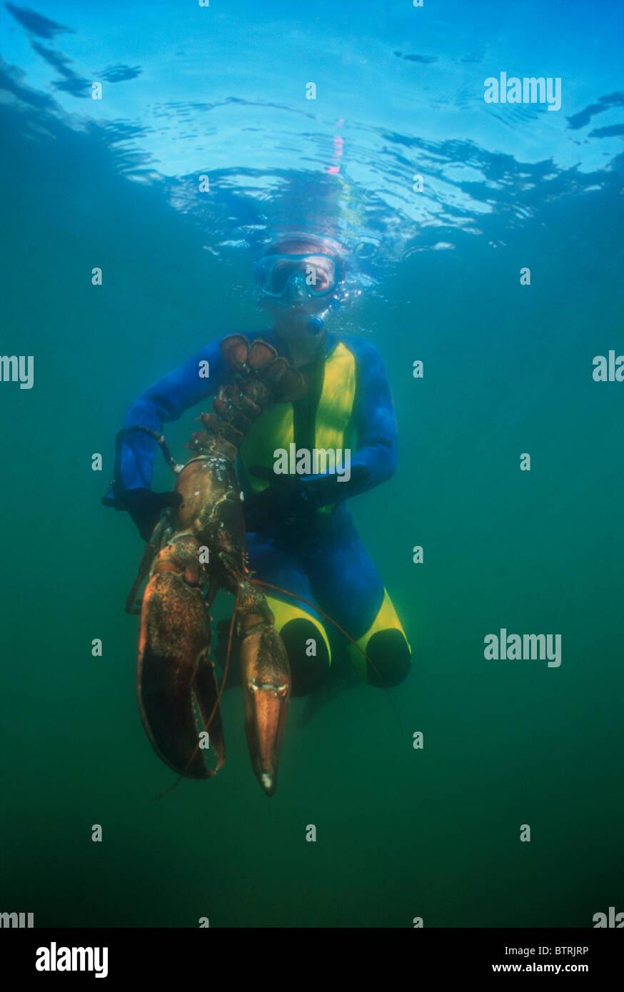 Nine year old catches 15 pound Giant Lobster (Homarus americanus). Gloucester, Massachusetts - Atlantic Ocean - - Stock Image