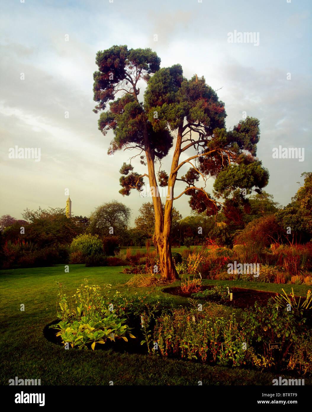 Irish National Botanic Gardens, Dublin, Co Dublin, Ireland; Scots ...