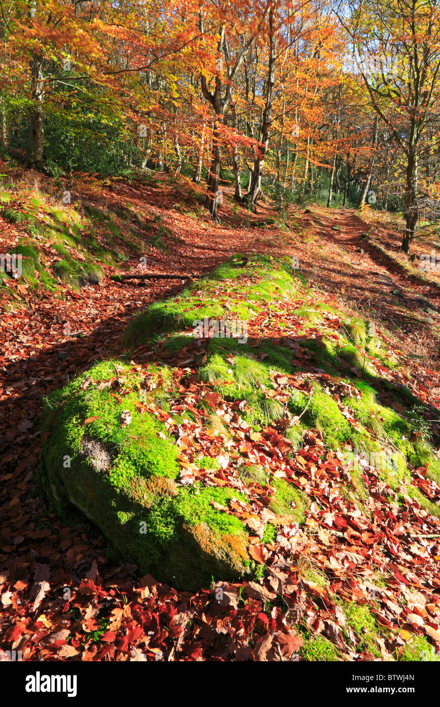 Wade Wood in autumn, Luddenden Dean, Halifax, West Yorkshire, England, UK. - Stock Image