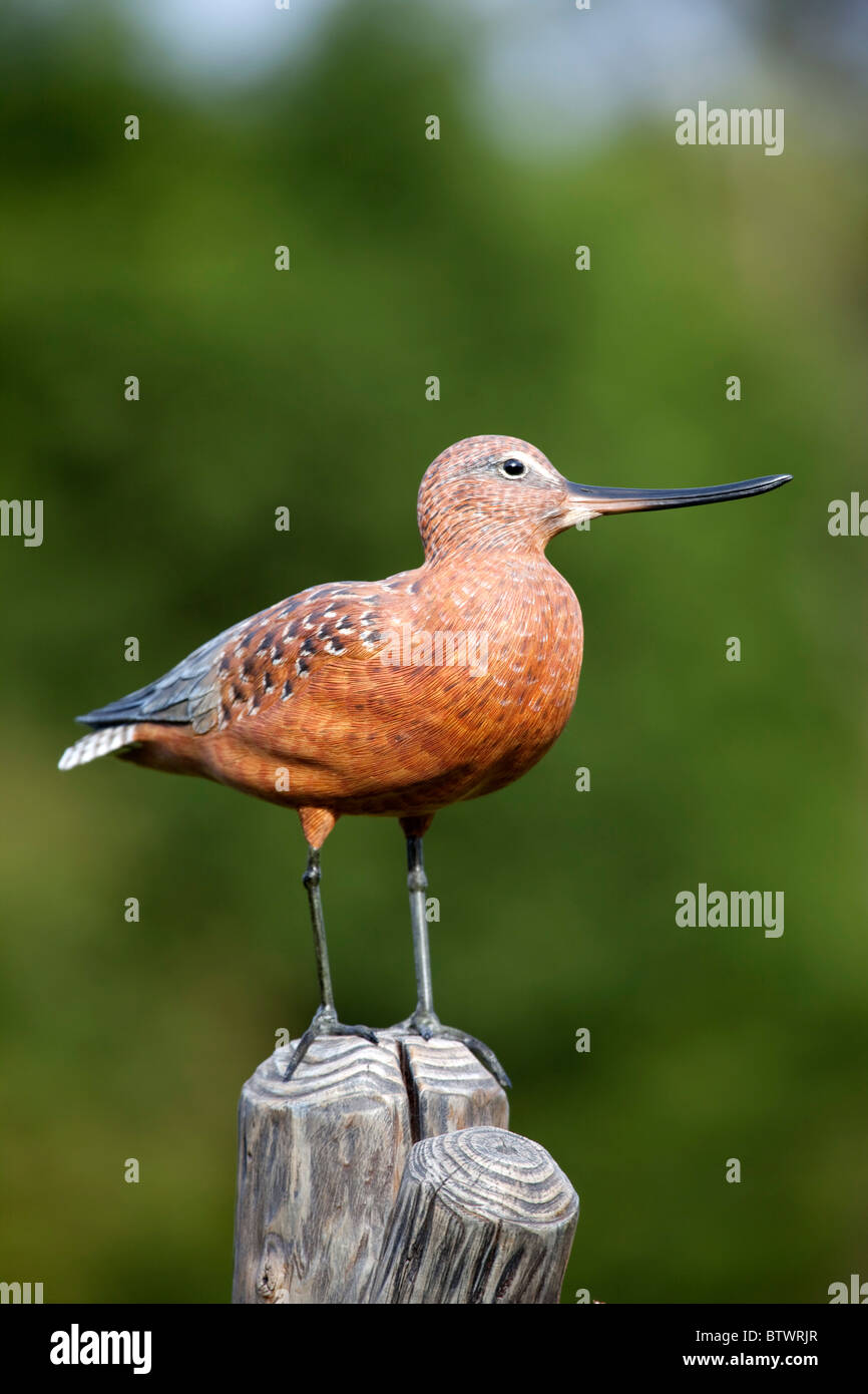Bar-Tailed Godwit carving by Mike Wood - Stock Image