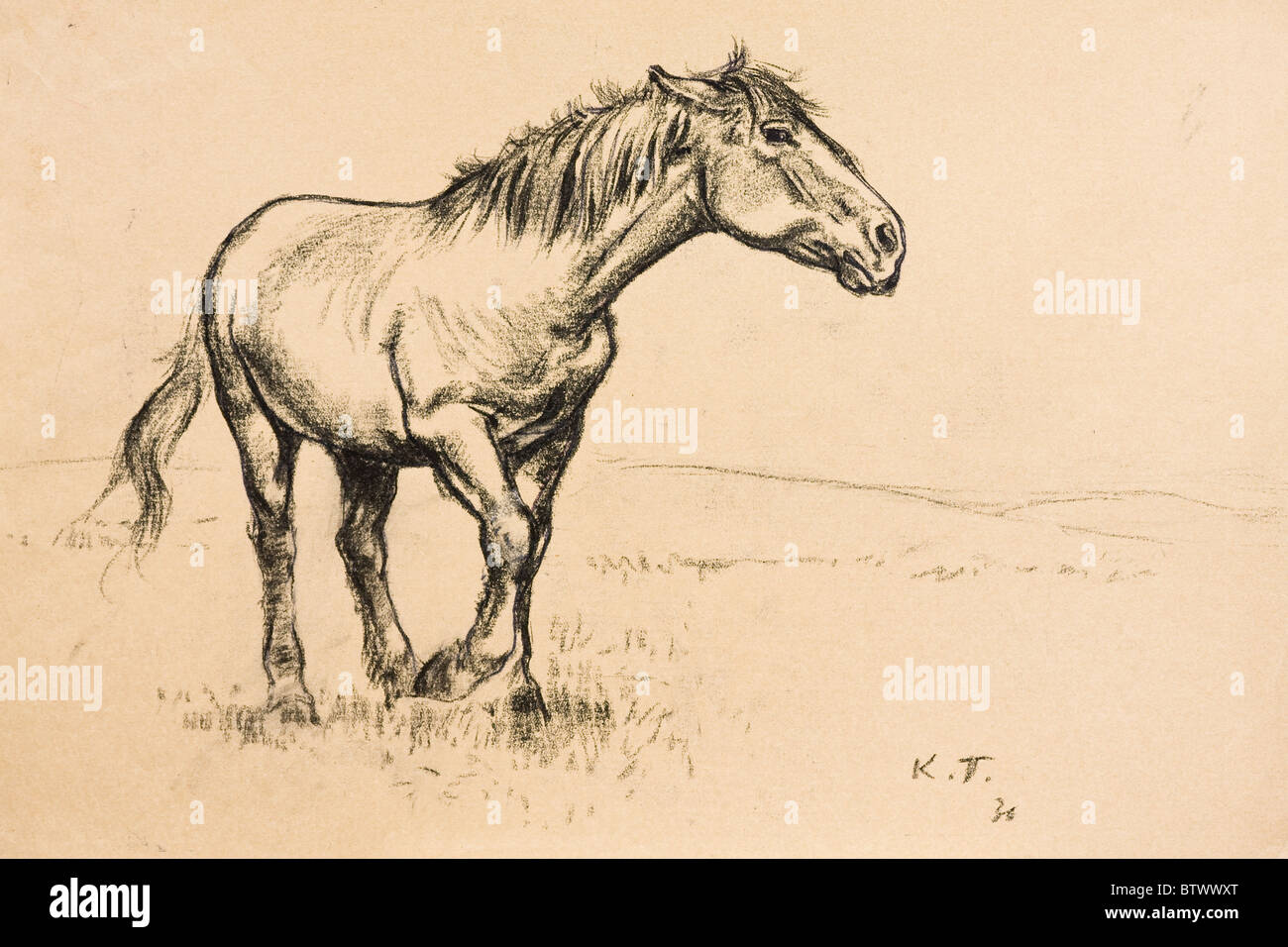 Horse portrait, charcoal on paper by Kurt Tessmann, 1936 - Stock Image