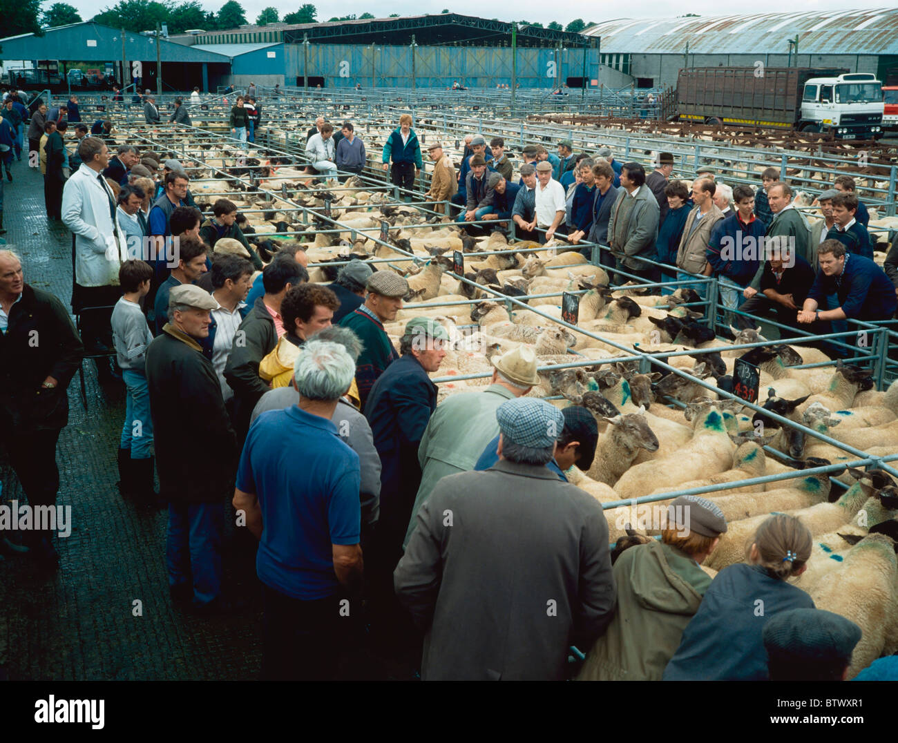 Sheep Mart (Market), Maynooth, Co Kildare, Ireland - Stock Image