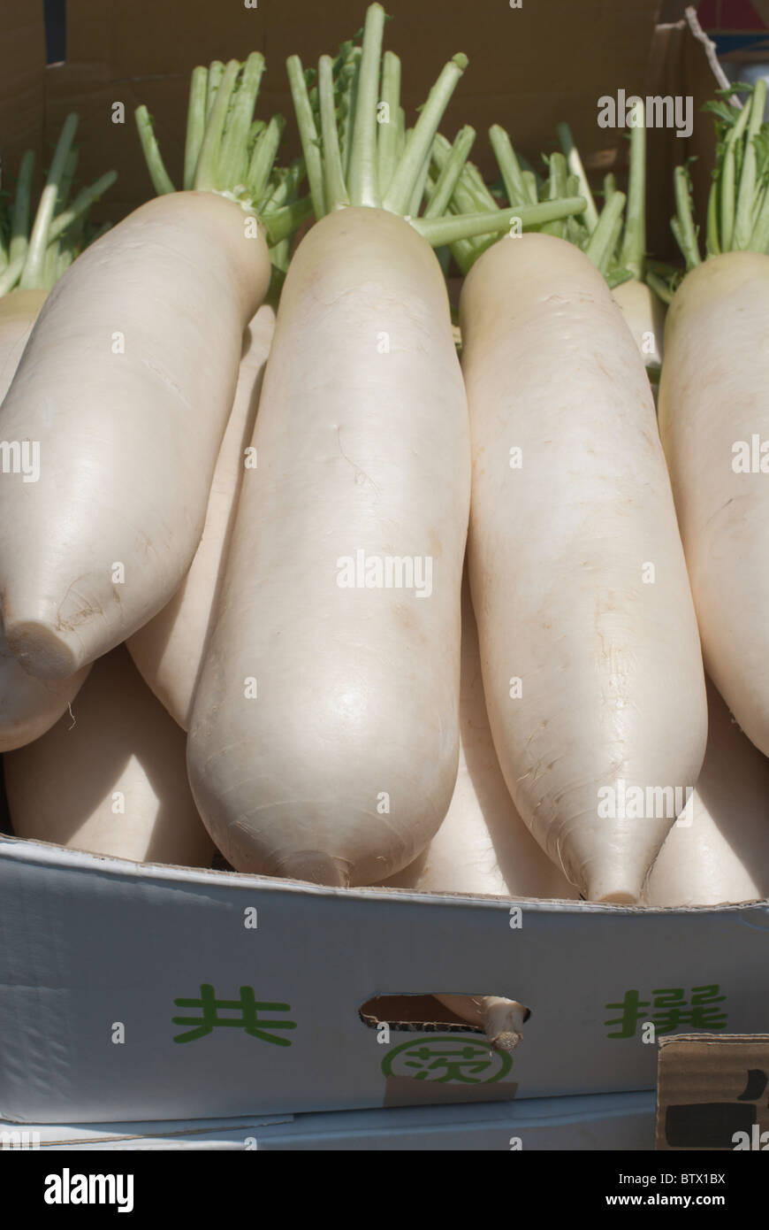 Daikon, large white Japanese radish, a staple of the county's cooking, for sale at the Ameyayokocho Market. - Stock Image