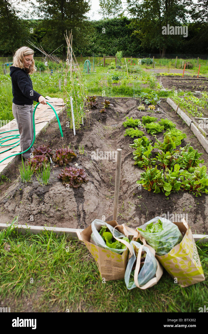 Woman watering her Pea Patch garden in south Seattle. - Stock Image