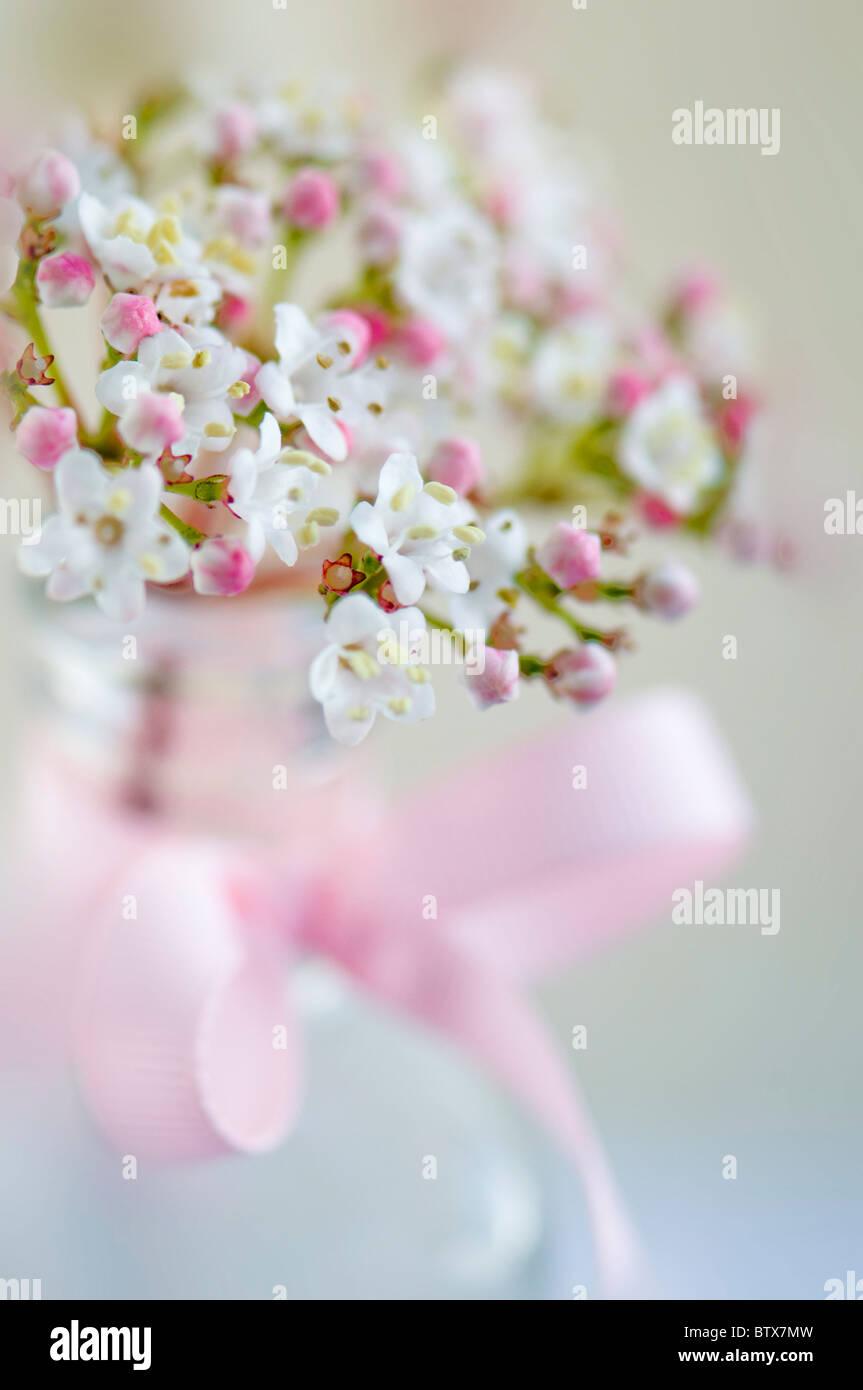 Viburnum flowers in vase soft-focus - Stock Image