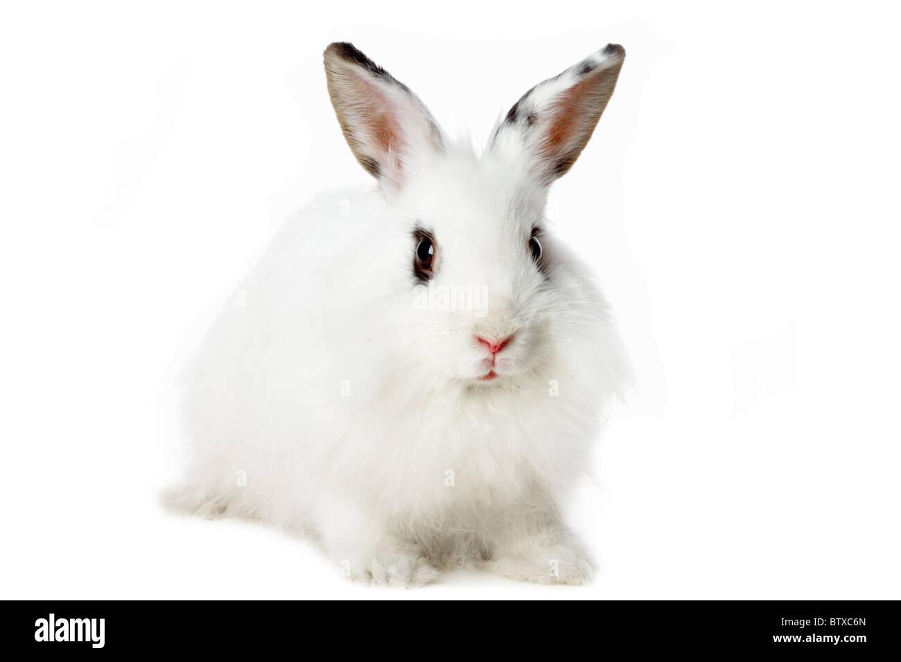 Image of fluffy white rabbit isolated over white background - Stock Image