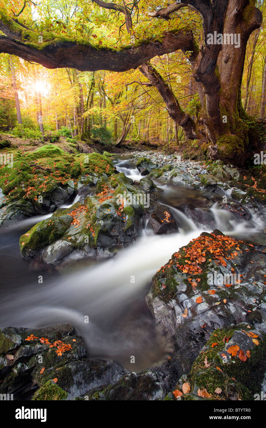 Tollymore Forest park, Northern Ireland. Stock Photo