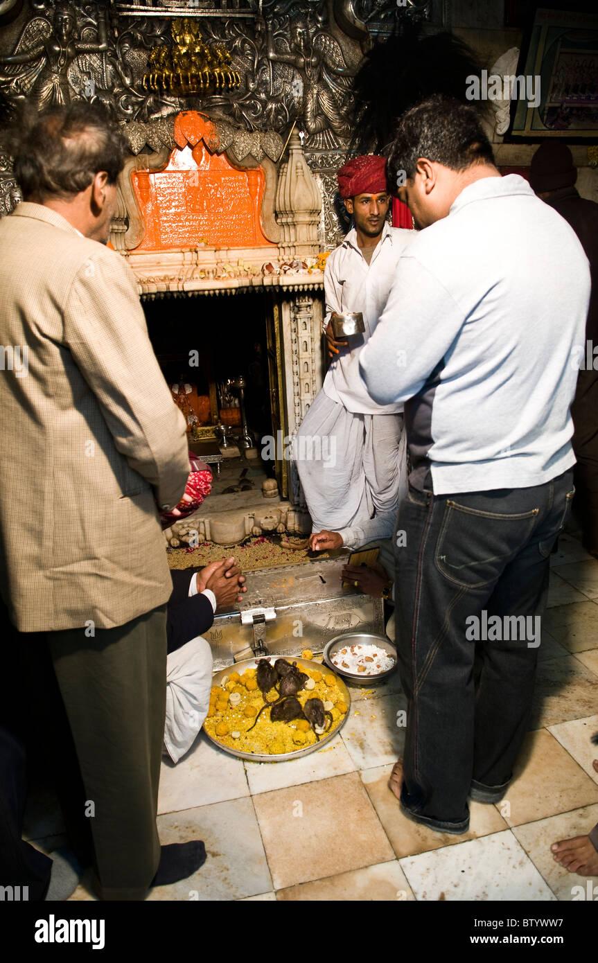Puja in the Karni Mata Rat temple in Deshnok town , Rajasthan. - Stock Image