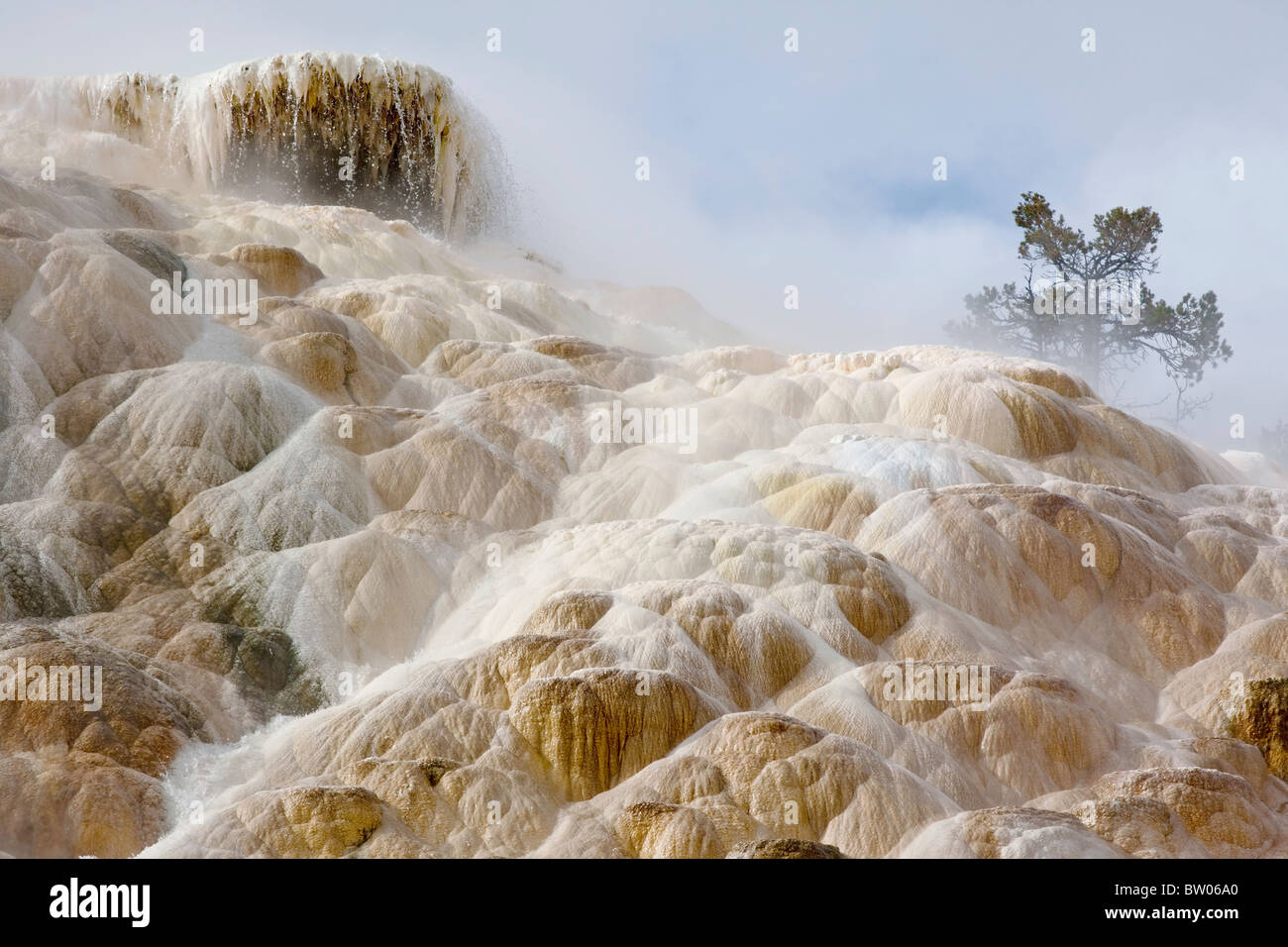 Morning steam rising from Mammoth's Palette Spring in Yellowstone National park - Stock Image