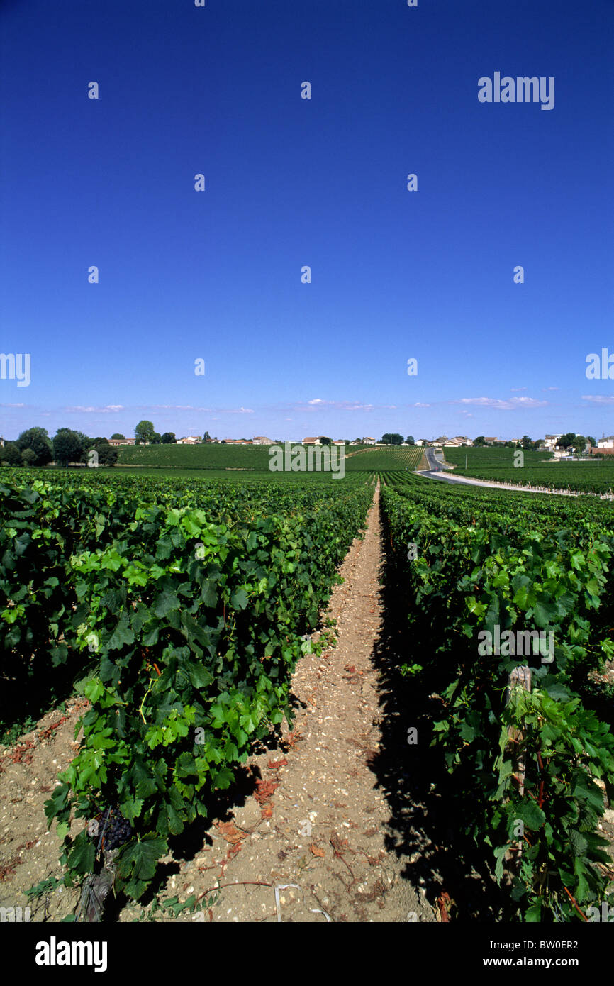 france, bordeaux, medoc vineyards - Stock Image