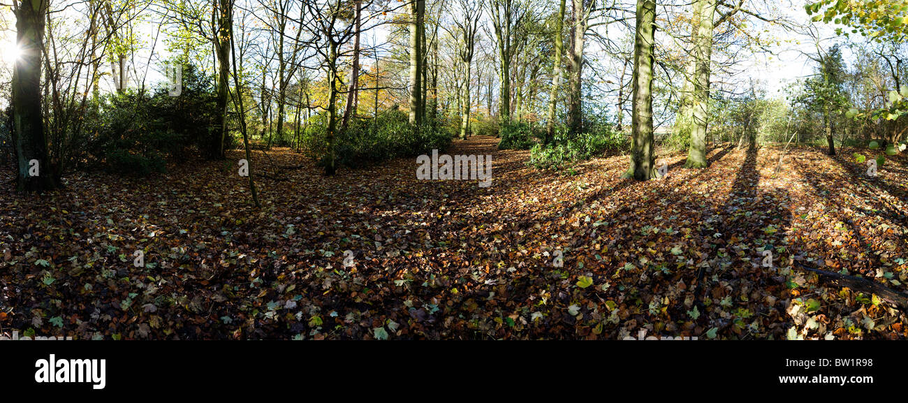 Panoramic view of the footpath walk through a sunny 'bluebell wood' at Grappenhall Heys, Warrington, Cheshire - Stock Image