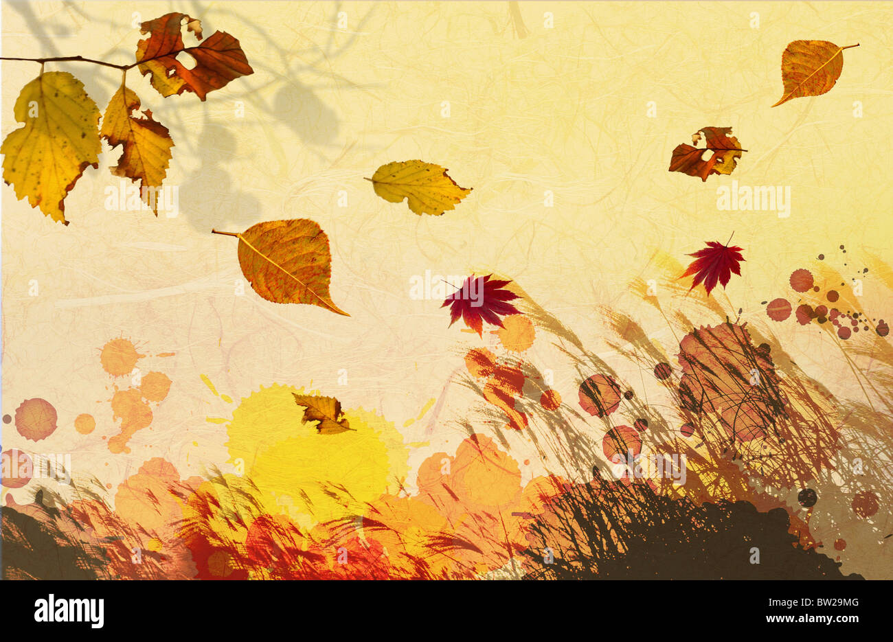 autumn leaves in illustration Stock Photo