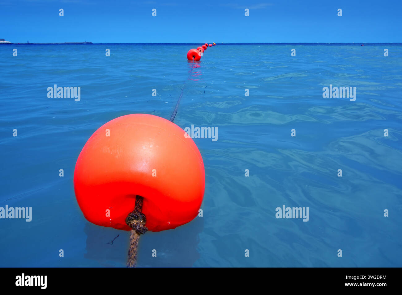 red buoy row floating blue sea with rope closeup perspective - Stock Image