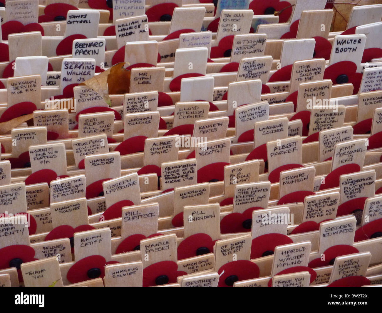 Remembrance crosses laid in the grounds of Westminster Abbey in 2010 - Stock Image