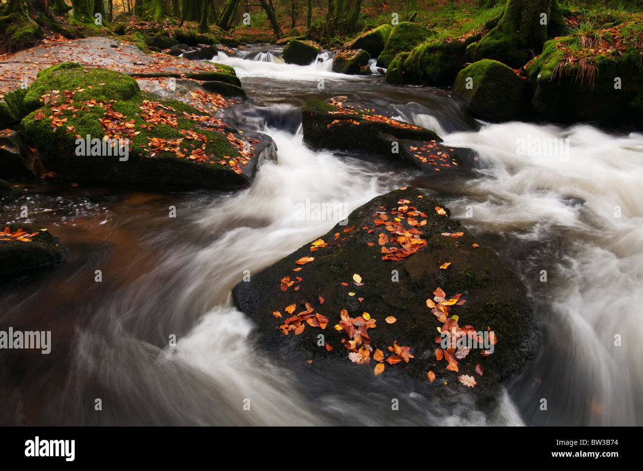 Fallen Autumn leaves at Golitha Falls on the River Fowey near Liskeard, Cornwall - Stock Image