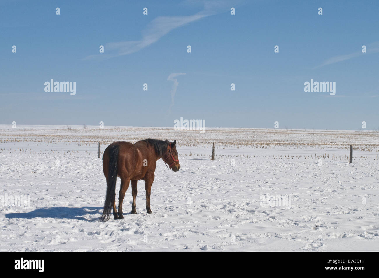 A Canadian winter landscape of a lone horse on a horse farm - Stock Image