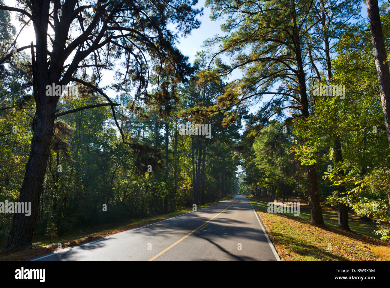 The Natchez Trace Parkway between Lorman and Natchez, Mississippi, USA - Stock Image