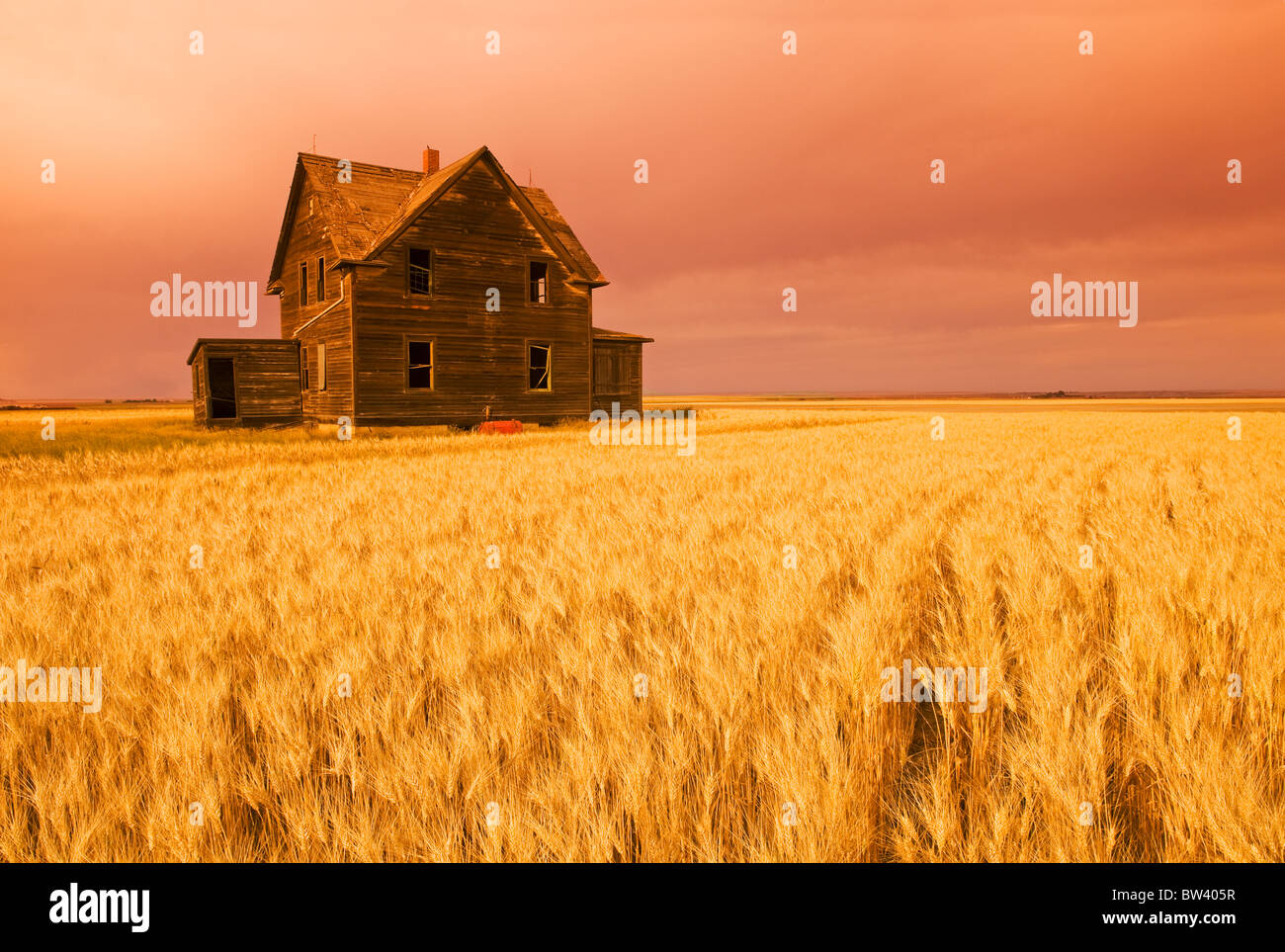 Abandoned farm house, wind-blown durum wheat field near Assiniboia, Saskatchewan - Stock Image