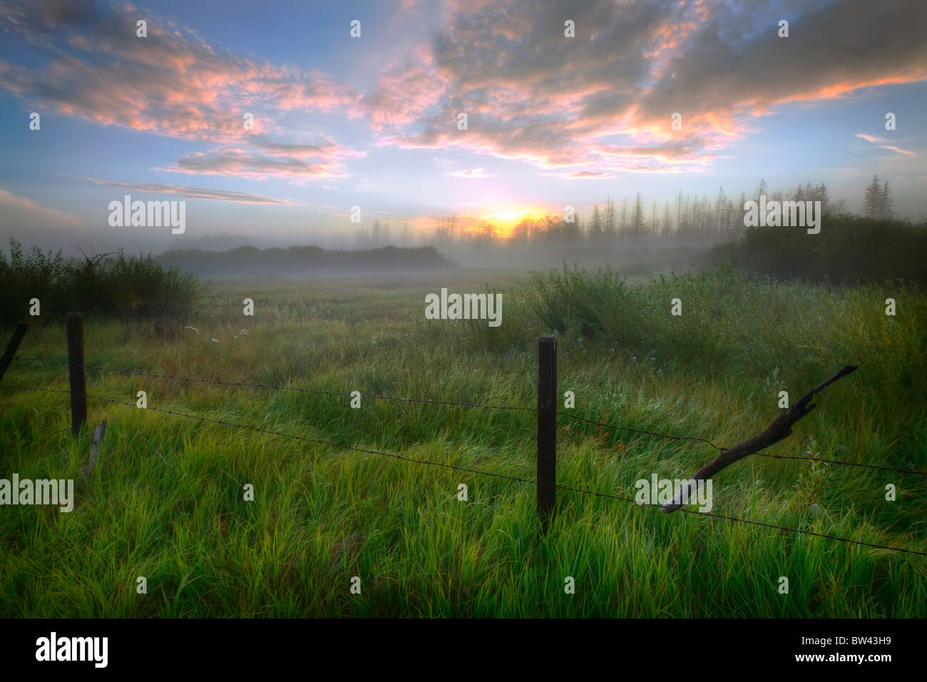 Sunrise and barbed wire fence on a summer pasture in central Alberta - Stock Image