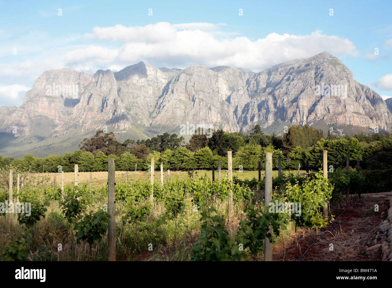 View from the Pommier wine estate, Stellenbosch, South Africa. - Stock Image