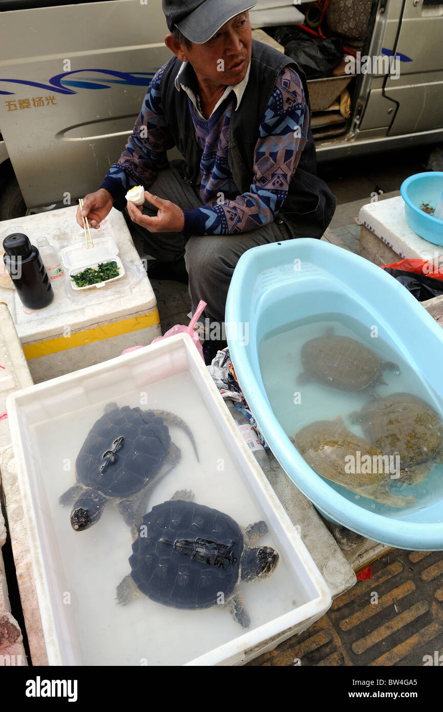 A man sells turtles in Qingdao, Shandong province, China. 12-Nov-2010 - Stock Image