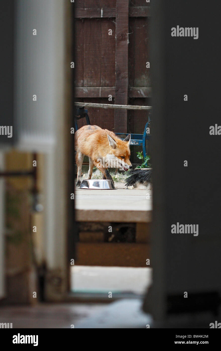 Dog Stealing Food From Container