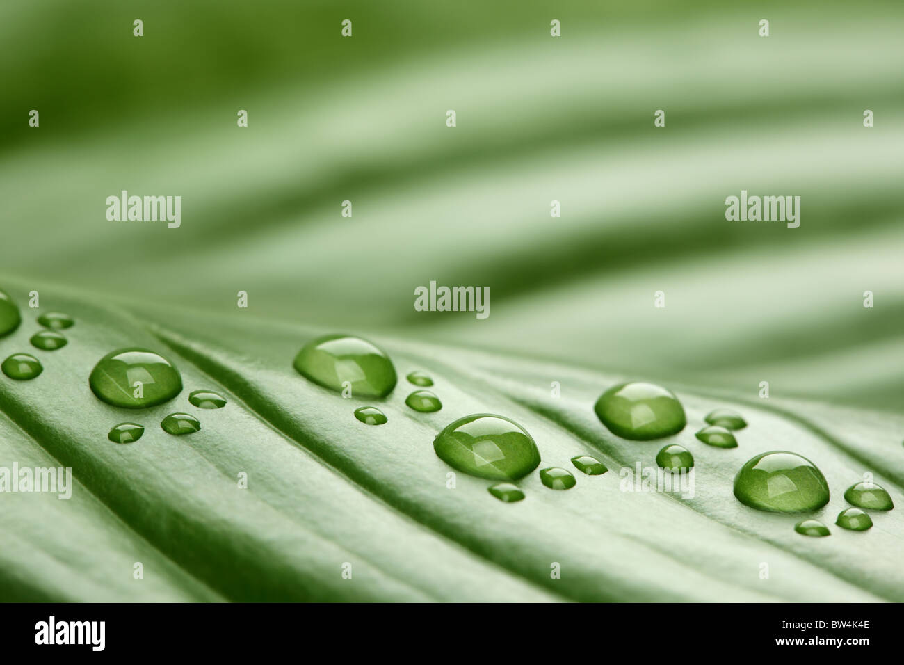 Footprint water drops on leaf - Stock Image